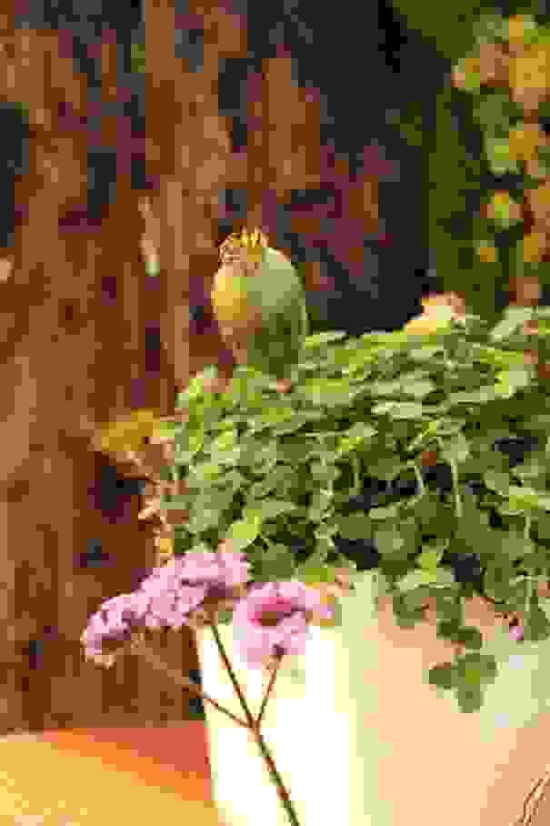 biobernai-2014-composition-florale