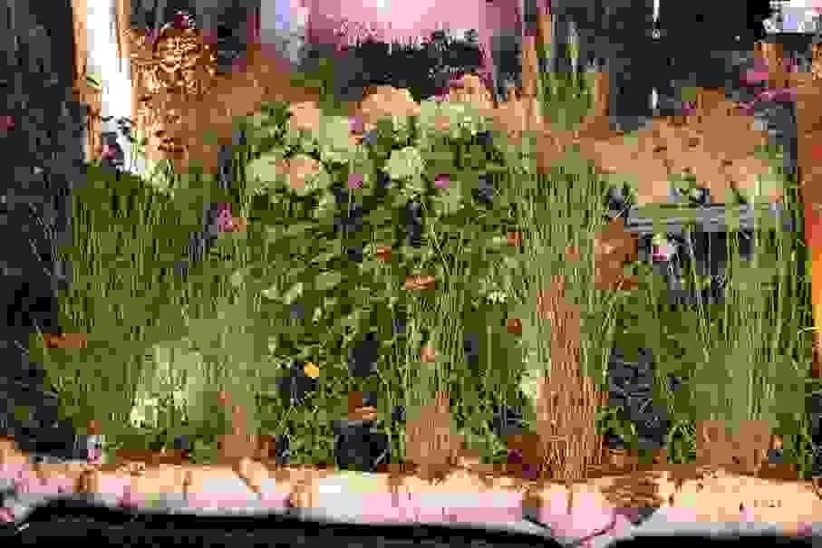 maison-de-caroline-hortensias