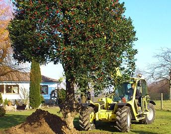 sauvetage-arbres